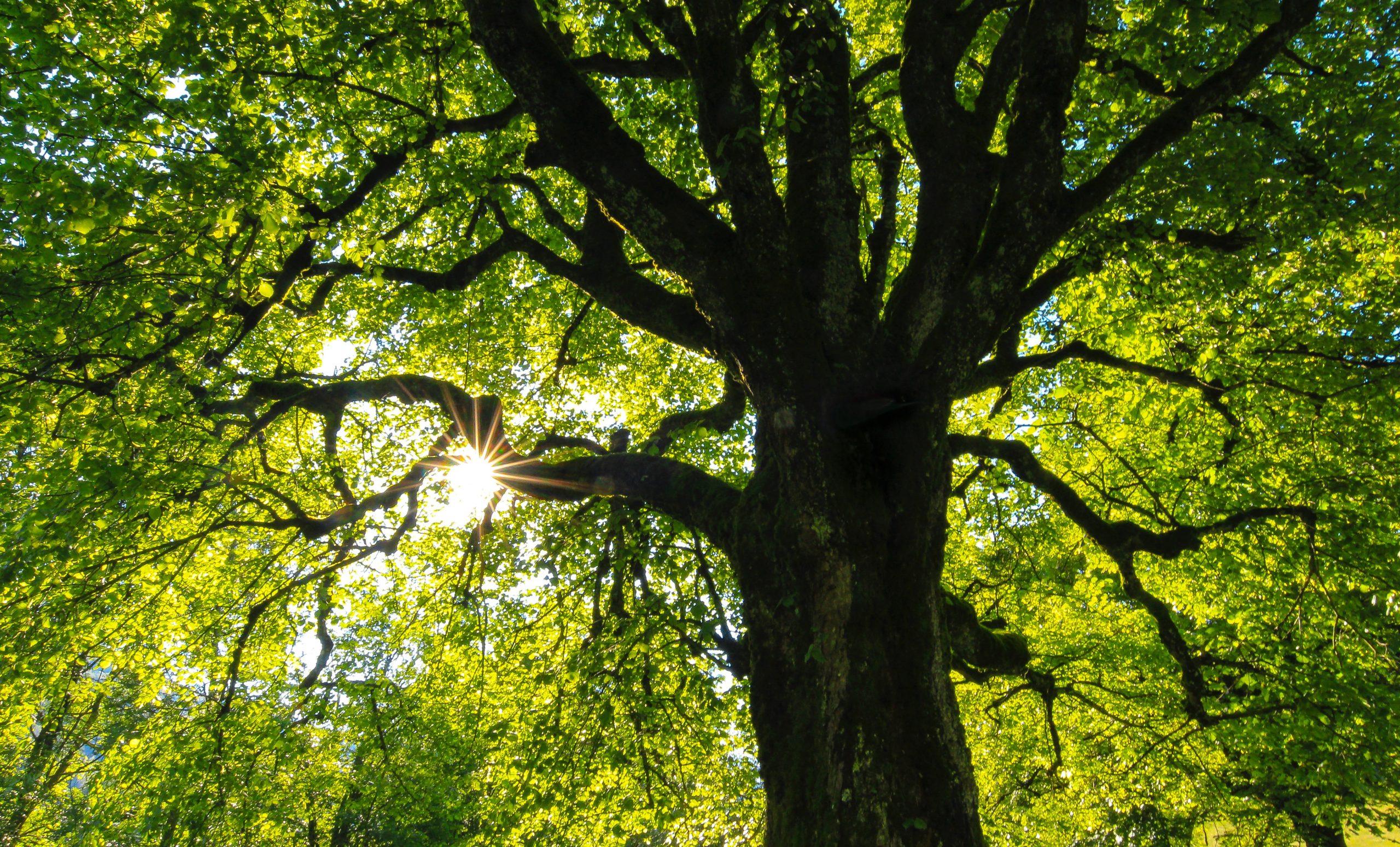 Bomen Kappen natuur